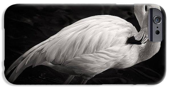Black And White Flamingo IPhone 6s Case