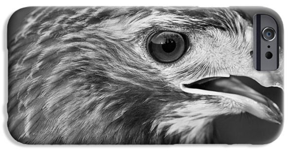 Black And White Hawk Portrait IPhone 6s Case by Dan Sproul