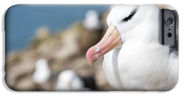 Black-browed Albatross (thalassarche IPhone 6s Case by Martin Zwick
