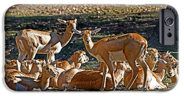 Blackbuck Female And Fawns IPhone 6s Case