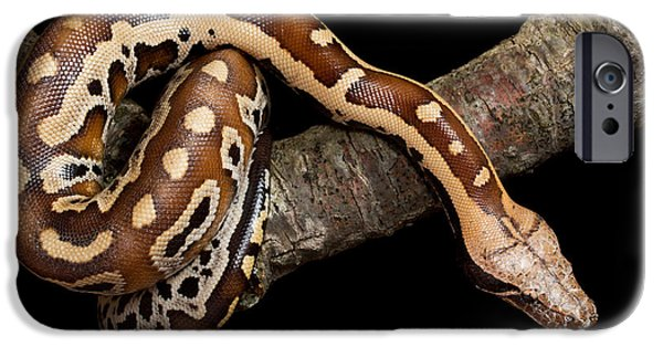 Blood Python Python Brongersmai IPhone 6s Case