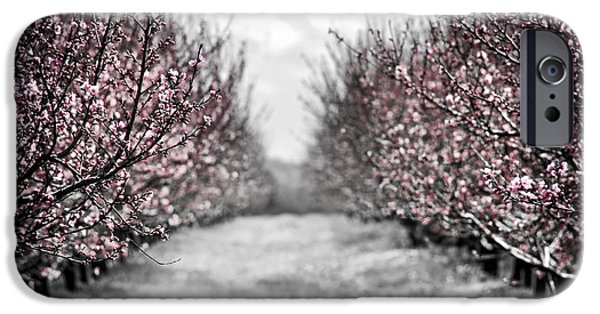 Blooming Peach Orchard IPhone 6s Case by Elena Elisseeva