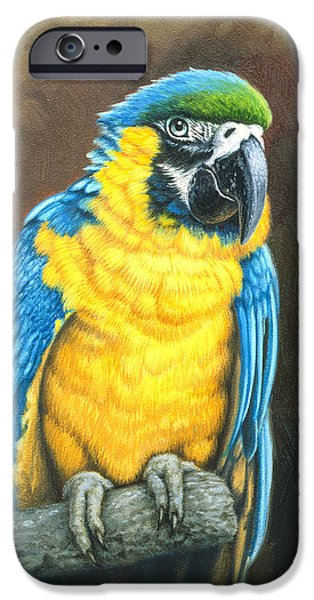 Macaw iPhone 6s Case - Blue And Gold Macaw by Paul Krapf