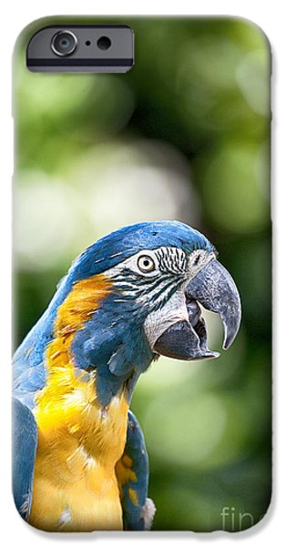 Blue And Gold Macaw V2 IPhone 6s Case by Douglas Barnard
