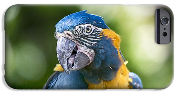Blue And Gold Macaw V3 IPhone 6s Case by Douglas Barnard