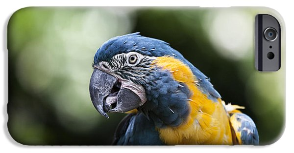 Blue And Gold Macaw V5 IPhone 6s Case by Douglas Barnard