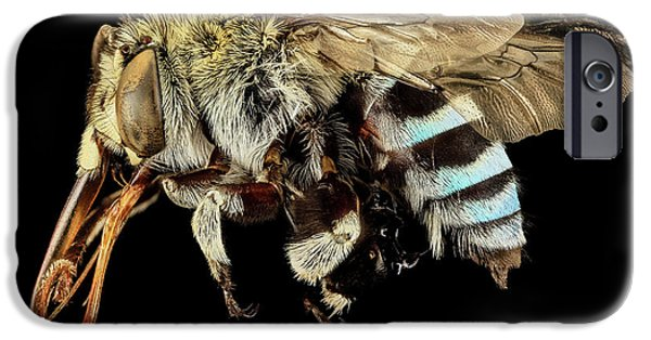 Blue Banded Bee IPhone Case by Us Geological Survey