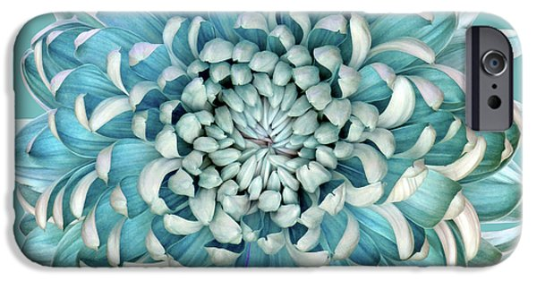Teal iPhone 6s Case - Blue Chrysanth by Brian Haslam