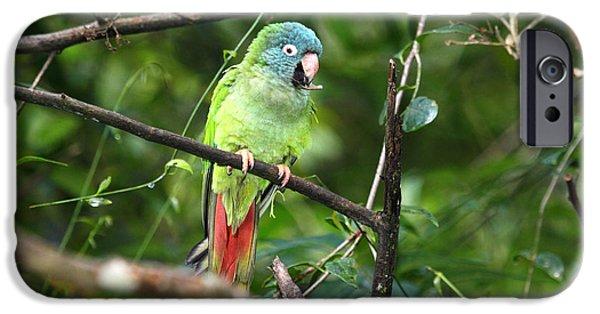 Blue Crowned Parakeet IPhone 6s Case by James Brunker