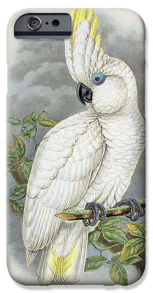 Cockatoo iPhone 6s Case - Blue-eyed Cockatoo by William Hart