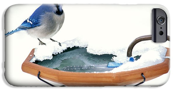 Blue Jay At Heated Birdbath IPhone 6s Case by Steve and Dave Maslowski