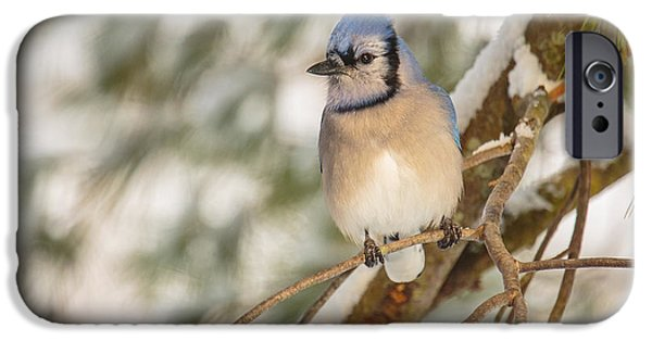 Bluejay iPhone 6s Case - Blue Jay by Everet Regal
