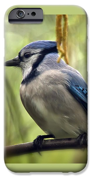Blue Jay On A Misty Spring Day - Square Format IPhone 6s Case by Lois Bryan