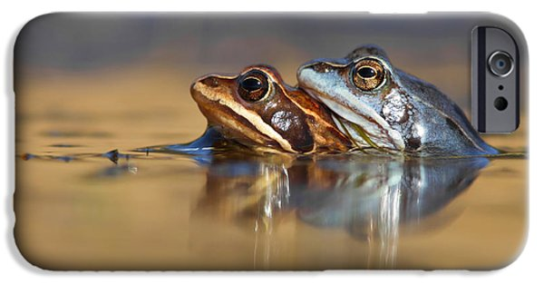 Blue Love ... Mating Moor Frogs  IPhone 6s Case by Roeselien Raimond