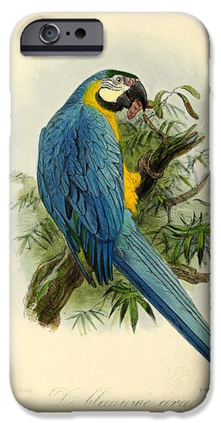 Blue Parrot IPhone 6s Case by Anton Oreshkin