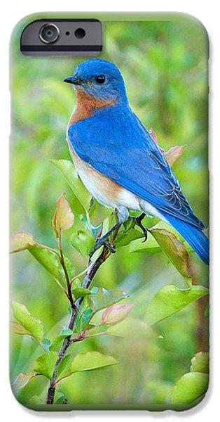 Animals iPhone 6s Case - Bluebird Joy by William Jobes