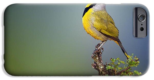 Animals iPhone 6s Case - Bokmakierie Bird - Telophorus Zeylonus by Johan Swanepoel