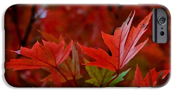 Brilliant Red Maples IPhone Case by Linda Unger