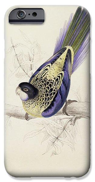 Browns Parakeet IPhone 6s Case