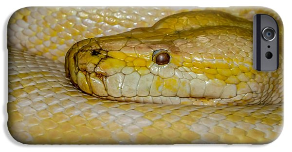 Burmese Python IPhone 6s Case
