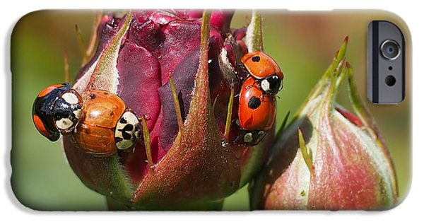 Beetle iPhone 6s Case - Busy Ladybugs by Rona Black