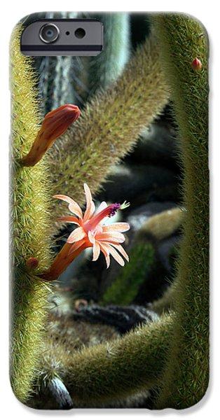 University Of Michigan iPhone 6s Case - Cactus (winterocereus Aureispina) by Jim West