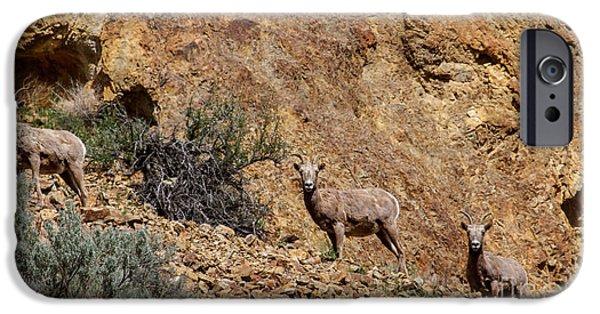 Rocky Mountain Bighorn Sheep iPhone 6s Case - California Bighorn Sheep by Robert Bales