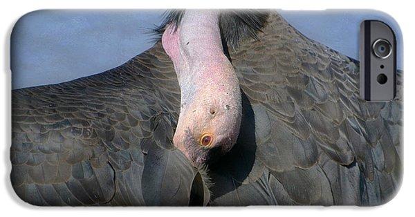 California Condor IPhone 6s Case