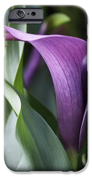 Lily iPhone 6s Case - Calla Lily In Purple Ombre by Rona Black