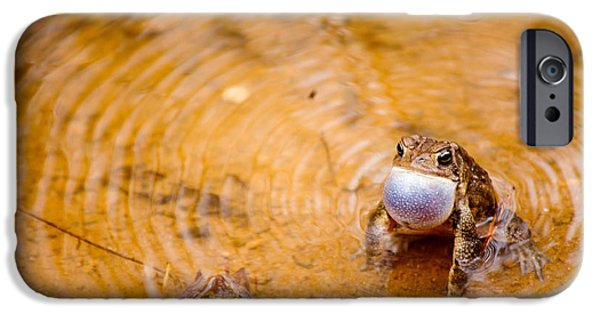 Calling All Frogs IPhone 6s Case