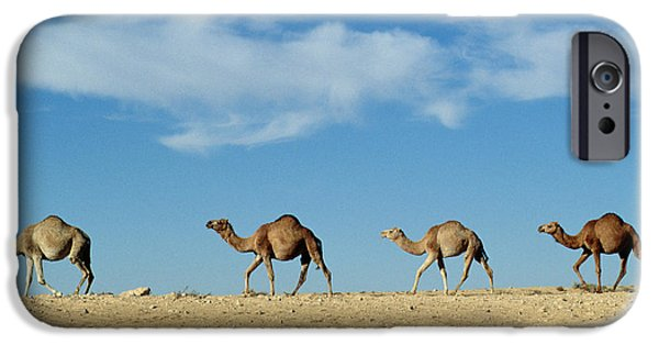 Camel Train IPhone Case by Anonymous
