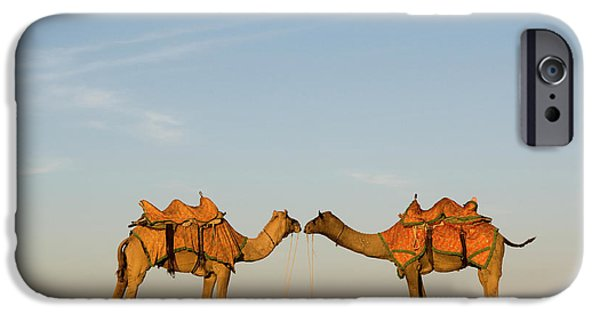 Camel iPhone 6s Case - Camels Stand Face To Face In The Thar by Steve Winter