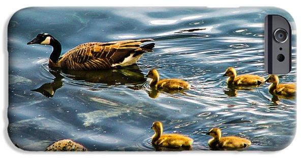 Gosling iPhone 6s Case - Canadian Goose And Goslings by Robert Bales