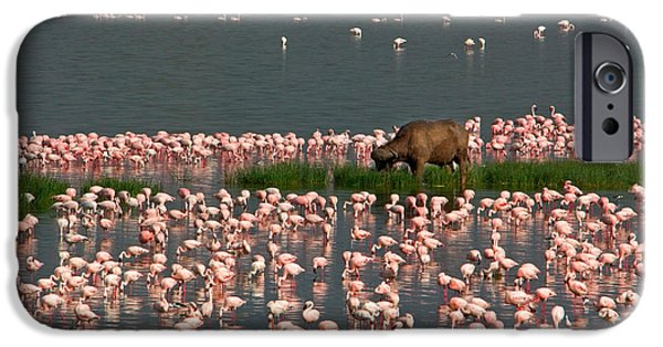 Cape Buffalo And Lesser Flamingos IPhone 6s Case