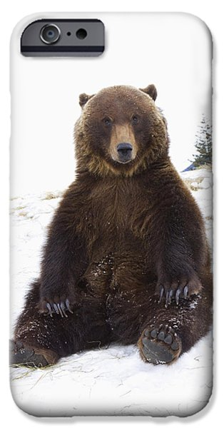 Captive Grizzly During Winter Sits IPhone 6s Case by Doug Lindstrand