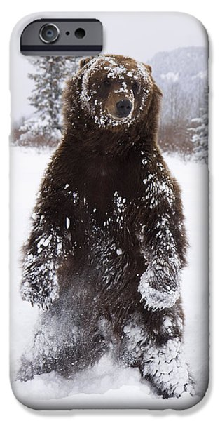 Captive Grizzly Stands On Hind Feet IPhone 6s Case by Doug Lindstrand