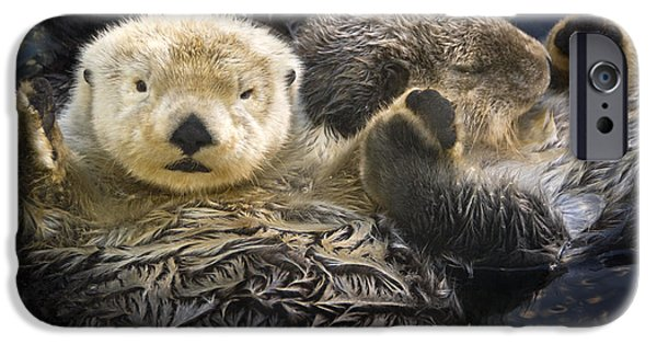 Otter iPhone 6s Case - Captive Two Sea Otters Holding Paws At by Tom Soucek