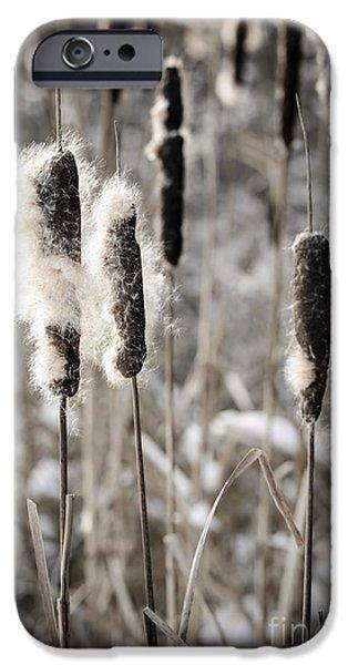 Cattails In Winter IPhone Case by Elena Elisseeva