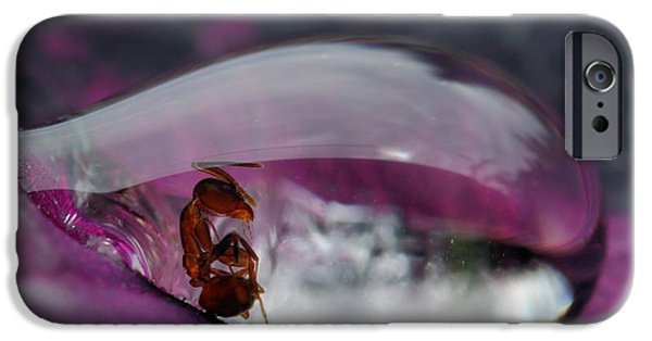 Ant iPhone 6s Case - Caught In A Droplet by Jimmy Hoffman