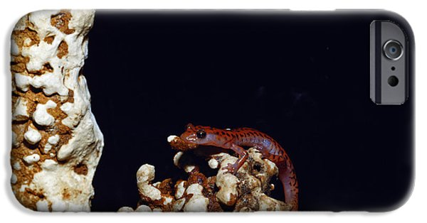 Cave Salamander IPhone 6s Case