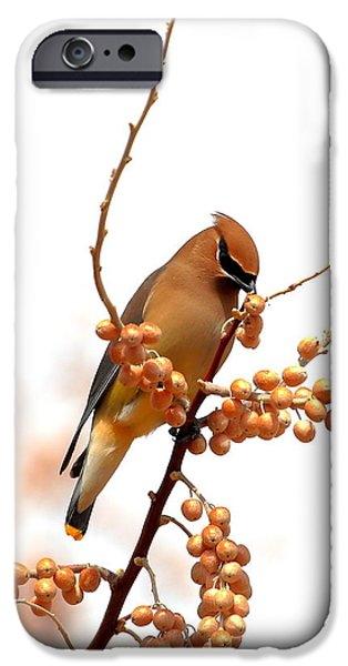 Cedar Wax Wing IPhone 6s Case by Floyd Tillery