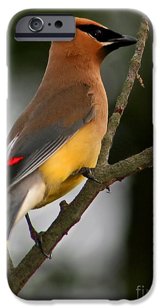 Cedar Wax Wing II IPhone 6s Case by Roger Becker