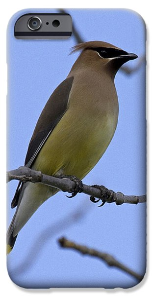 Cedar Waxwing 2 IPhone 6s Case by Eric Mace