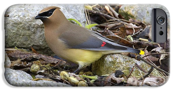 Cedar Waxwing IPhone 6s Case by Eric Mace