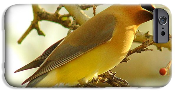 Cedar Waxwing IPhone 6s Case by Robert Frederick