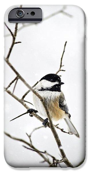 Charming Winter Chickadee IPhone 6s Case