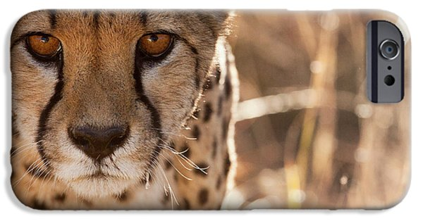 Cheetah Conservation Fund, Namibia IPhone 6s Case by Janet Muir