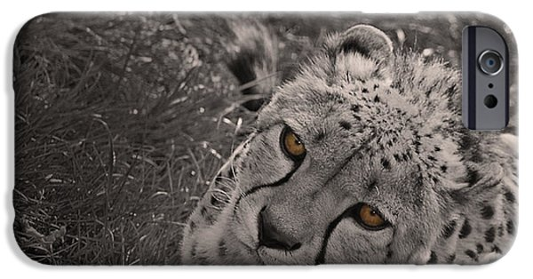 Cheetah Eyes IPhone 6s Case by Martin Newman