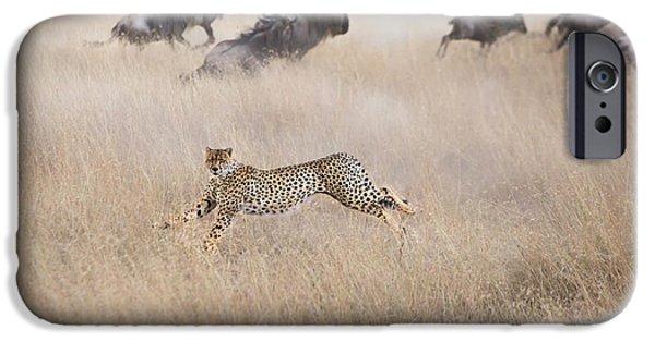 Cheetah iPhone 6s Case - Cheetah Hunting by Jun Zuo