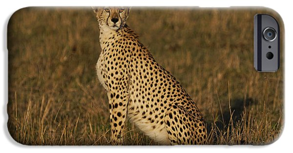 Cheetah On Savanna Masai Mara Kenya IPhone 6s Case by Hiroya Minakuchi